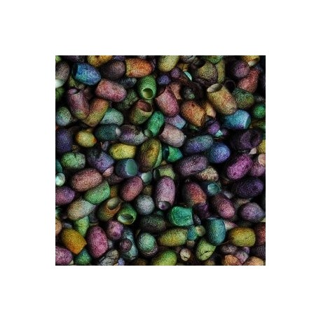 Cocons de soie Prune