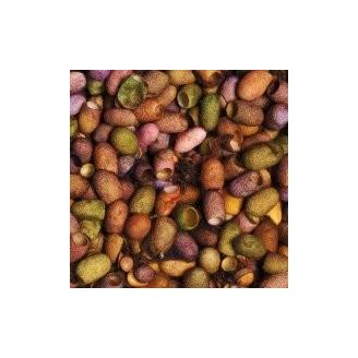 Cocons de soie Landes