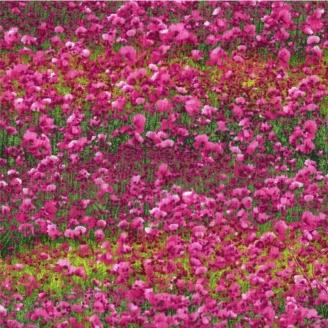 Tissu patchwork champs de fleurs fuchsia