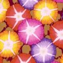 Tissu Philip Jacobs fleurs Glory fond bordeaux PJ085