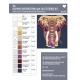 The Elephant Abstractions quilt (l'Eléphant) - Modèle de patchwork