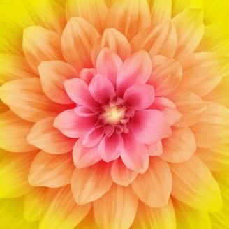 Panneau de tissu patchwork Dahlia Dream Big - Daisy