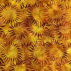 Tissu batik tournesols marrons fond jaune