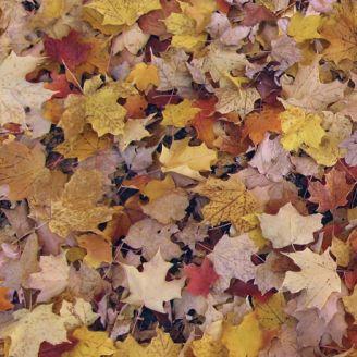 Tissu patchwork feuilles d'automne - Open Air