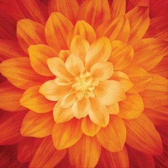 Panneau de tissu patchwork Dahlia Dream Big - Fire